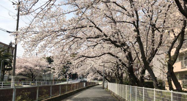 別府周辺でお花見を楽しむなら…桜の穴場スポット第3選(後編)