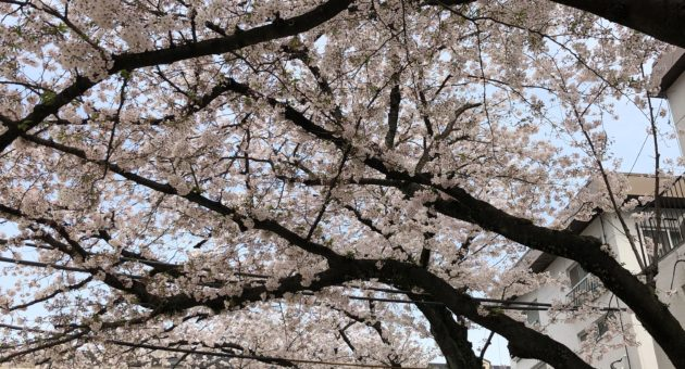 別府周辺でお花見を楽しむなら…桜の穴場スポット第3選(前編)