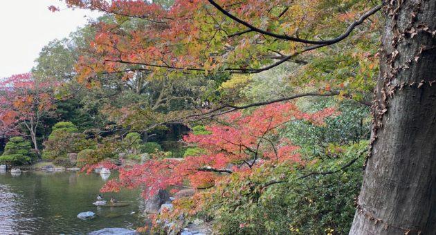 大広間でくつろぎながら、池の周りを散策しながら紅葉を楽しめる「友泉亭公園」。